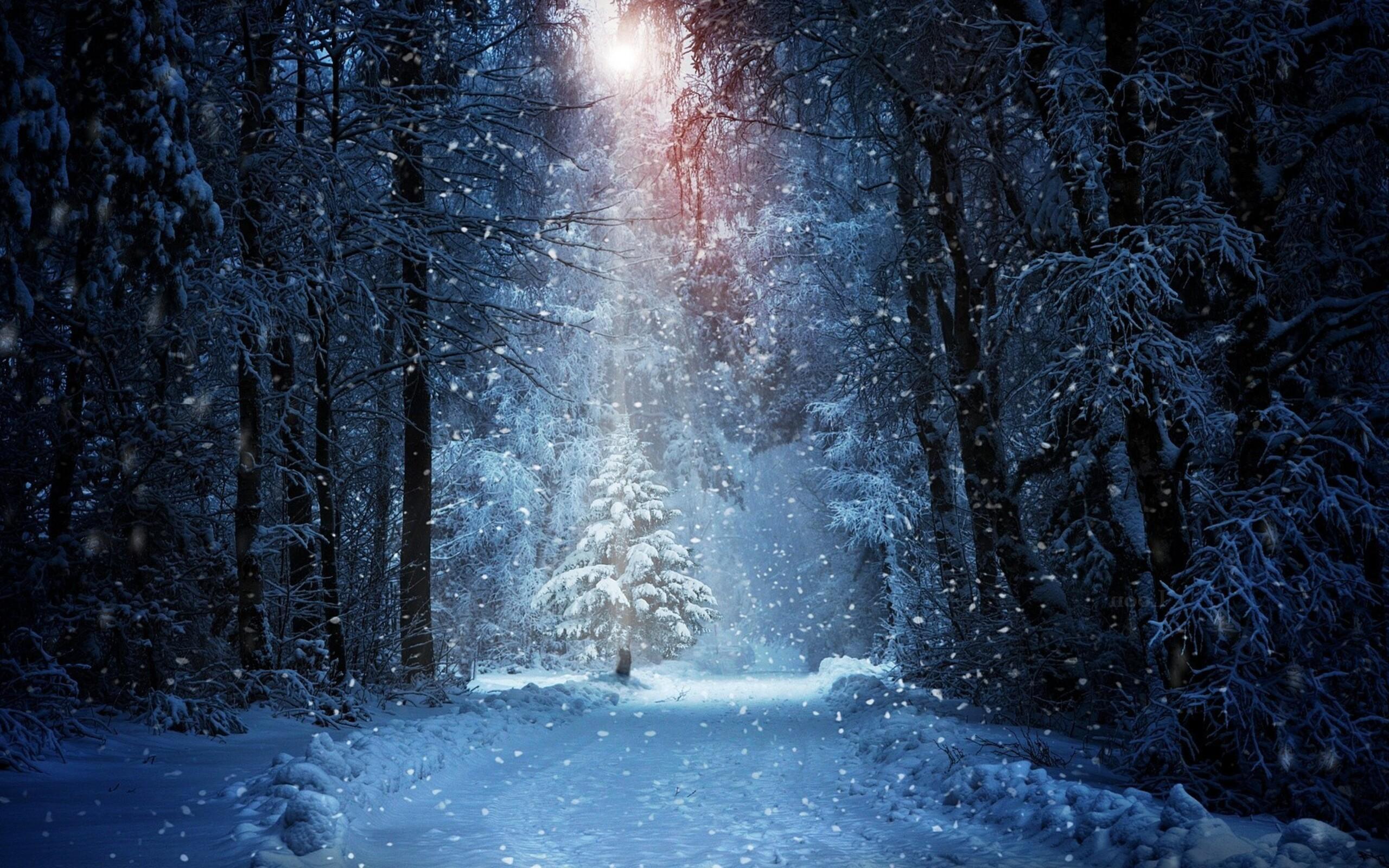 Лес в снегу без смс