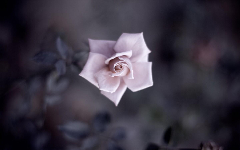 fower-petals.jpg