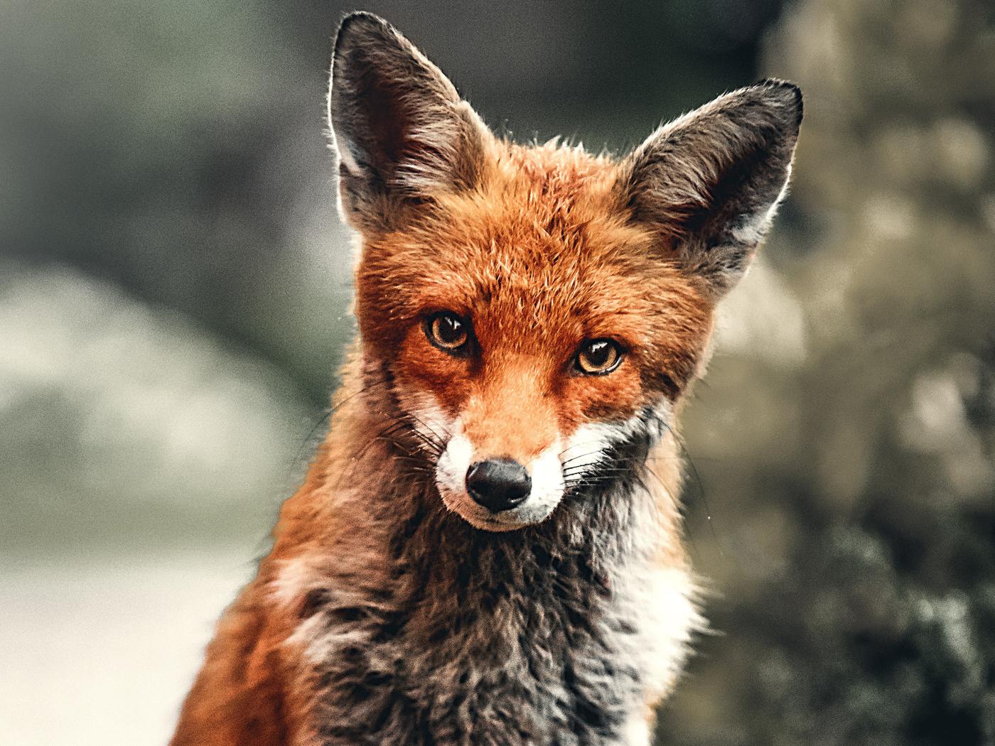 fox-depth-4k-oi.jpg