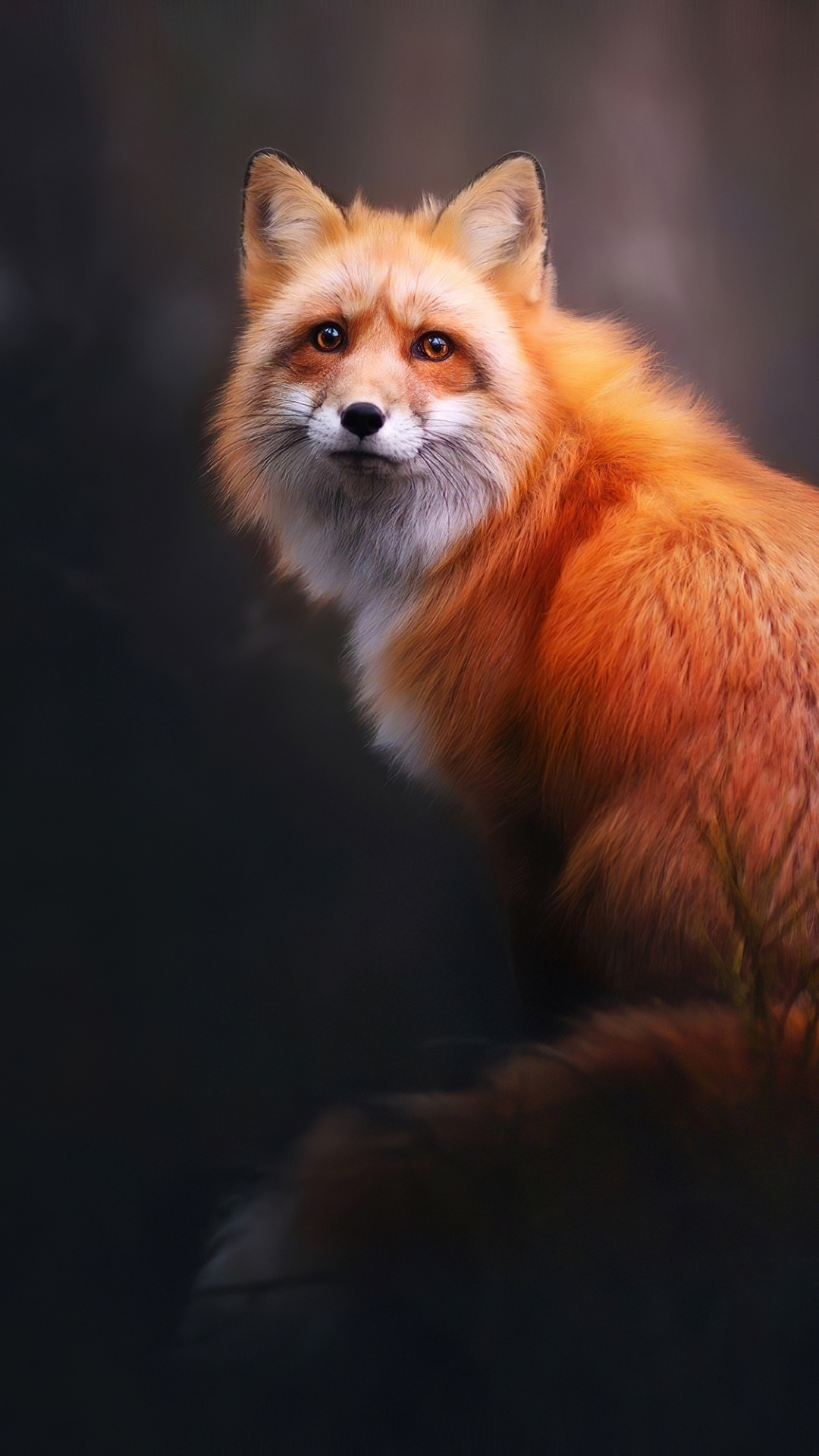 fox-digital-art-4k-qg.jpg