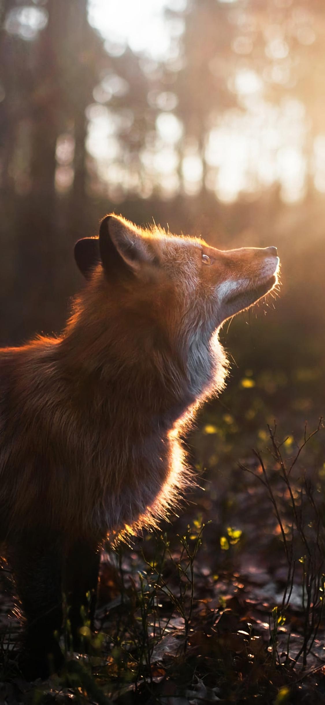 fox-outdoor-ih.jpg