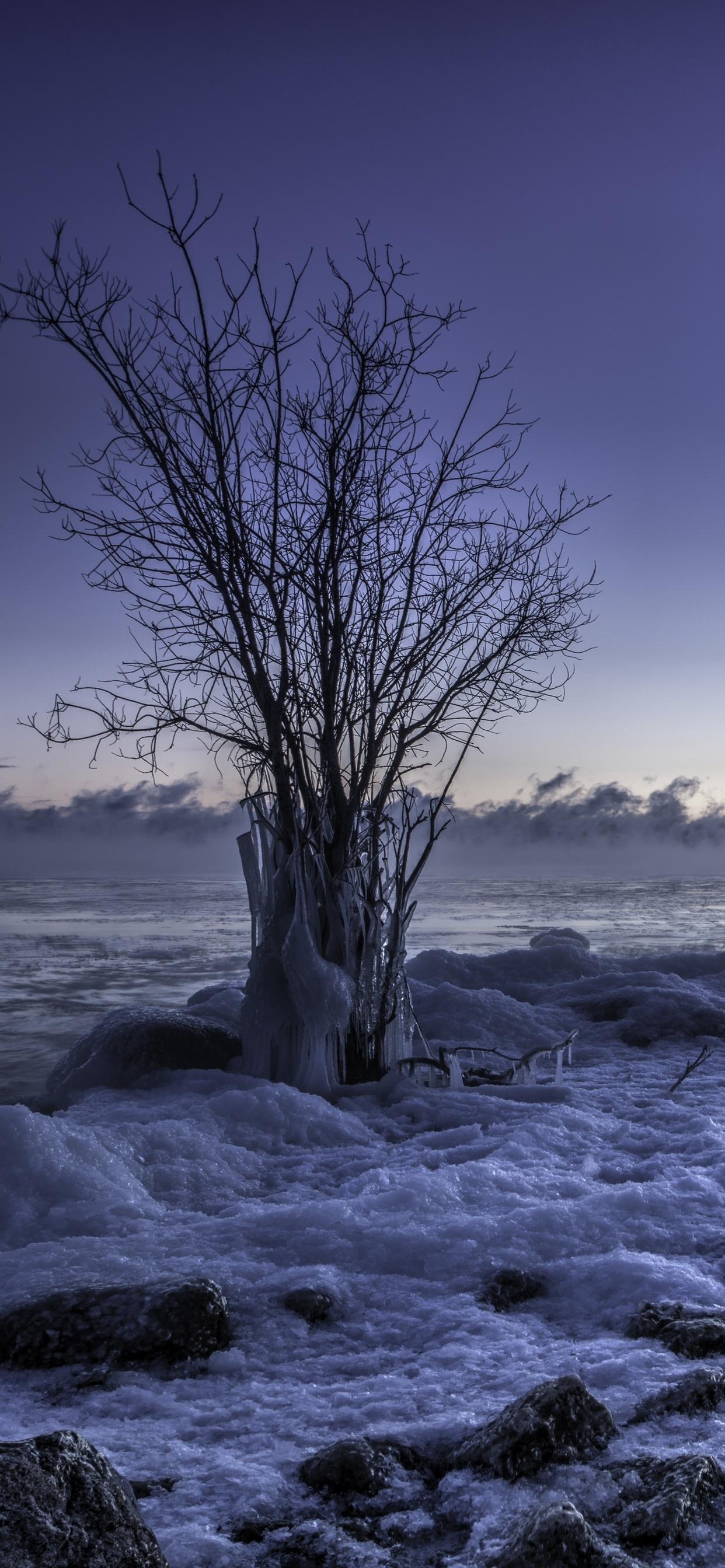1242x2688 Frozen Winter Snow Landscape Iphone Xs Max Hd 4k