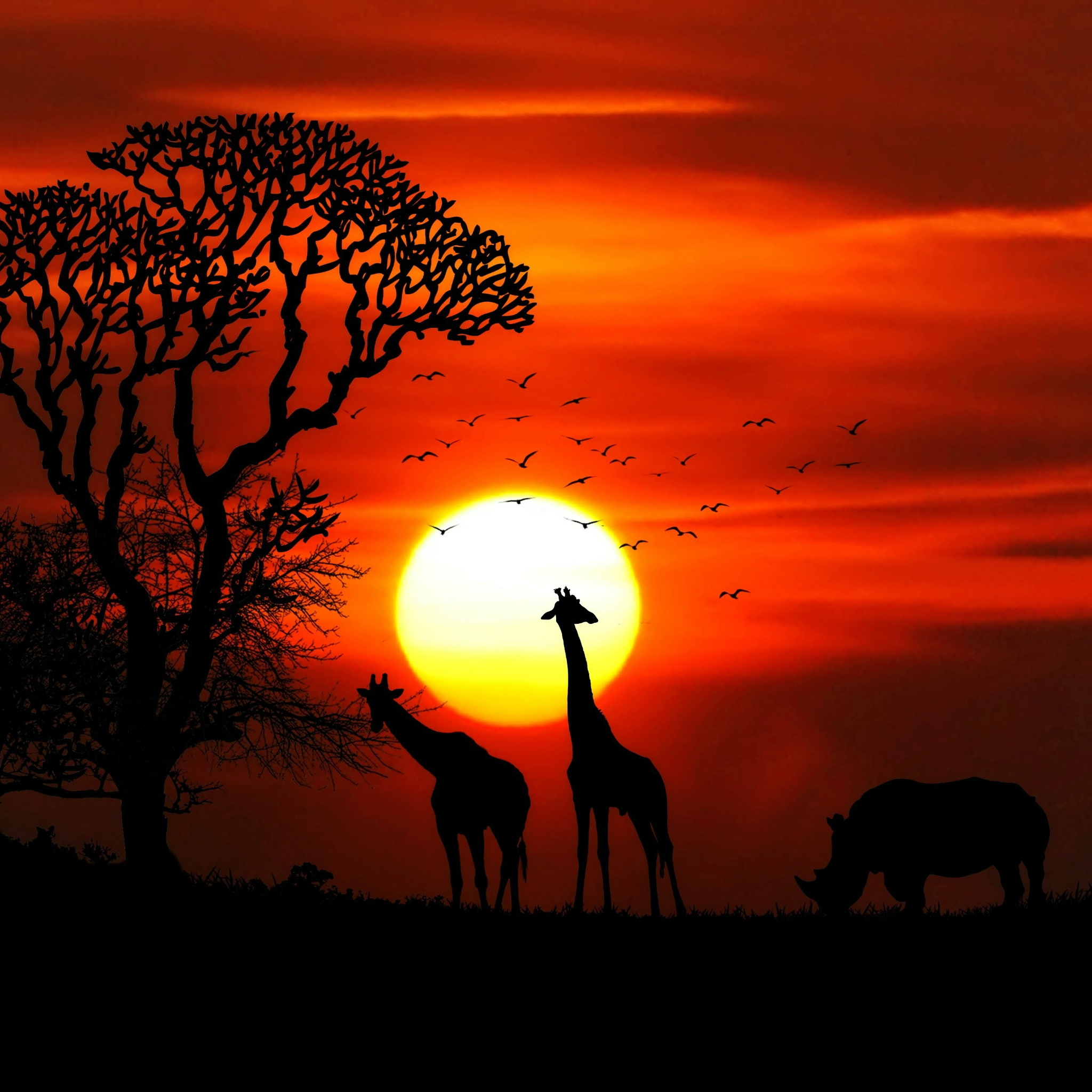 2048x2048 Giraffe Rhino Sunset Red Sky Tree Forest Nature