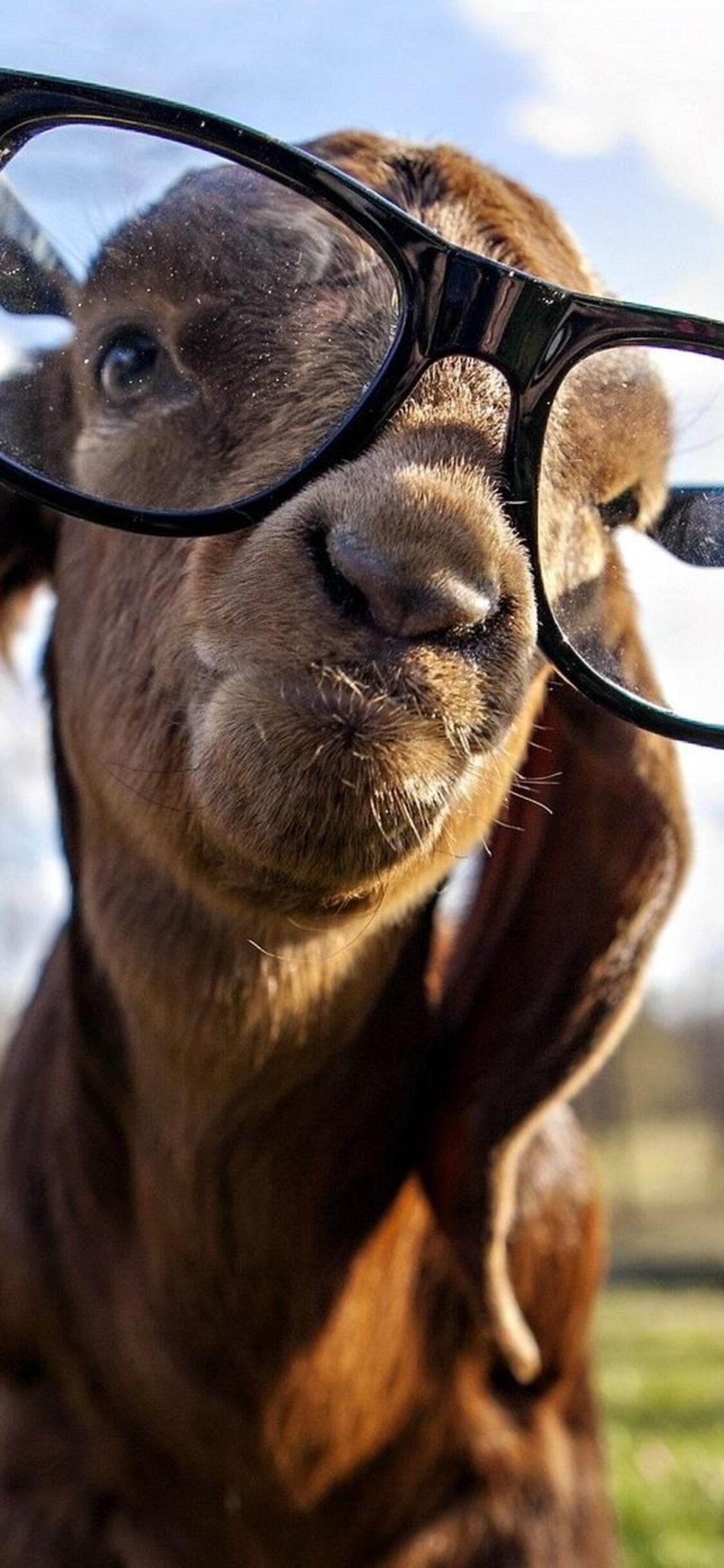 goat-got-swag.jpg
