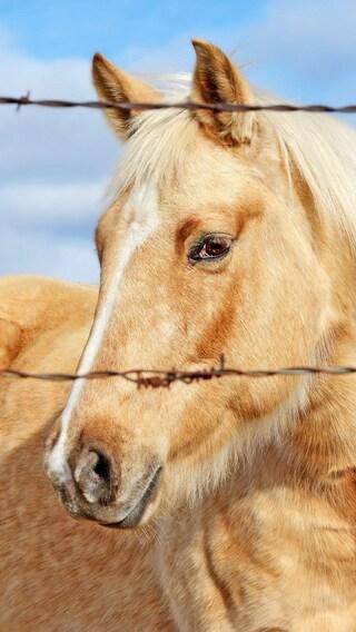 golden-horse.jpg