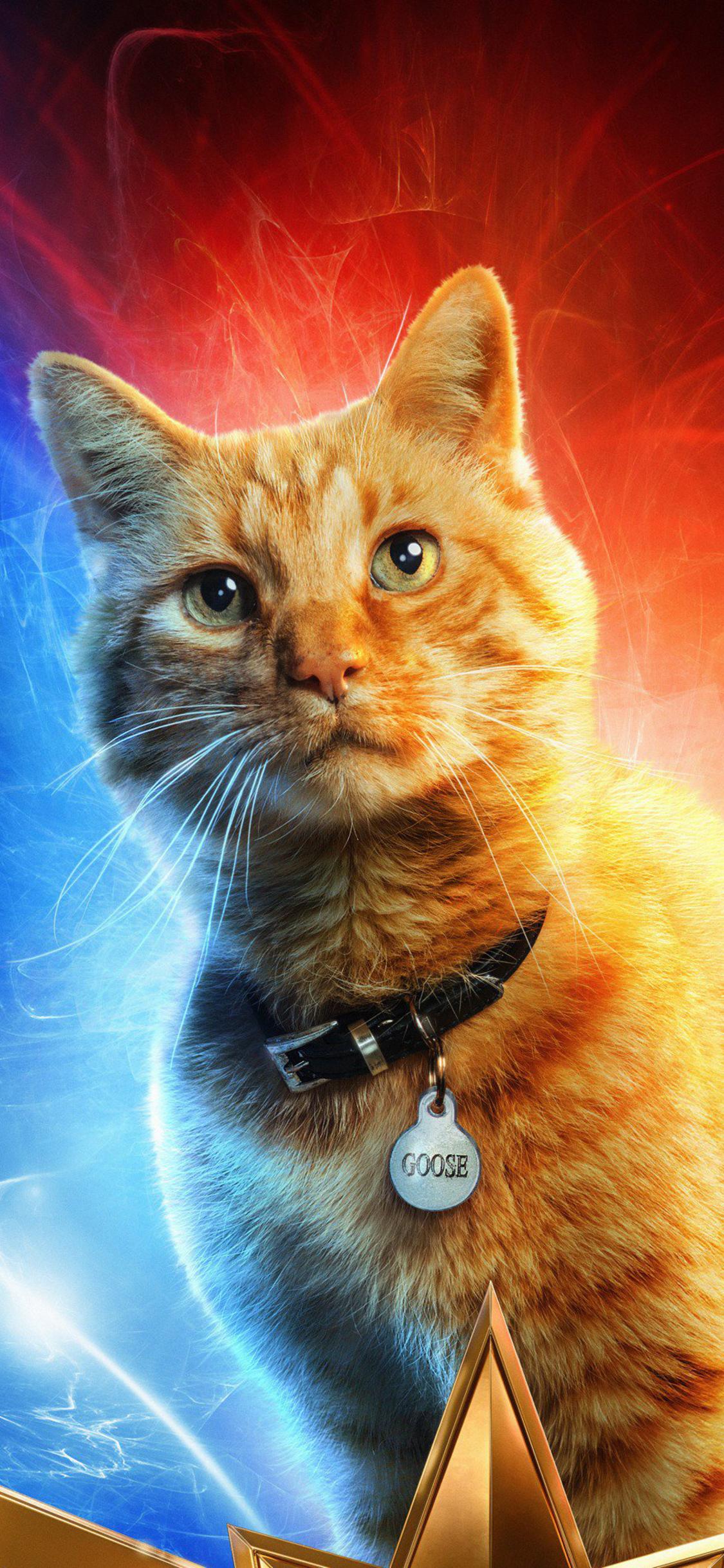 goose-the-cat-in-captain-marvel-p8.jpg