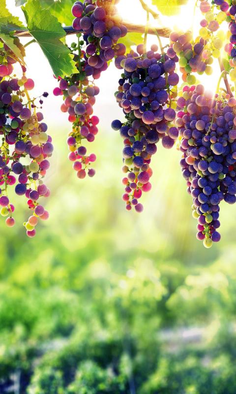 grape-8k-32.jpg