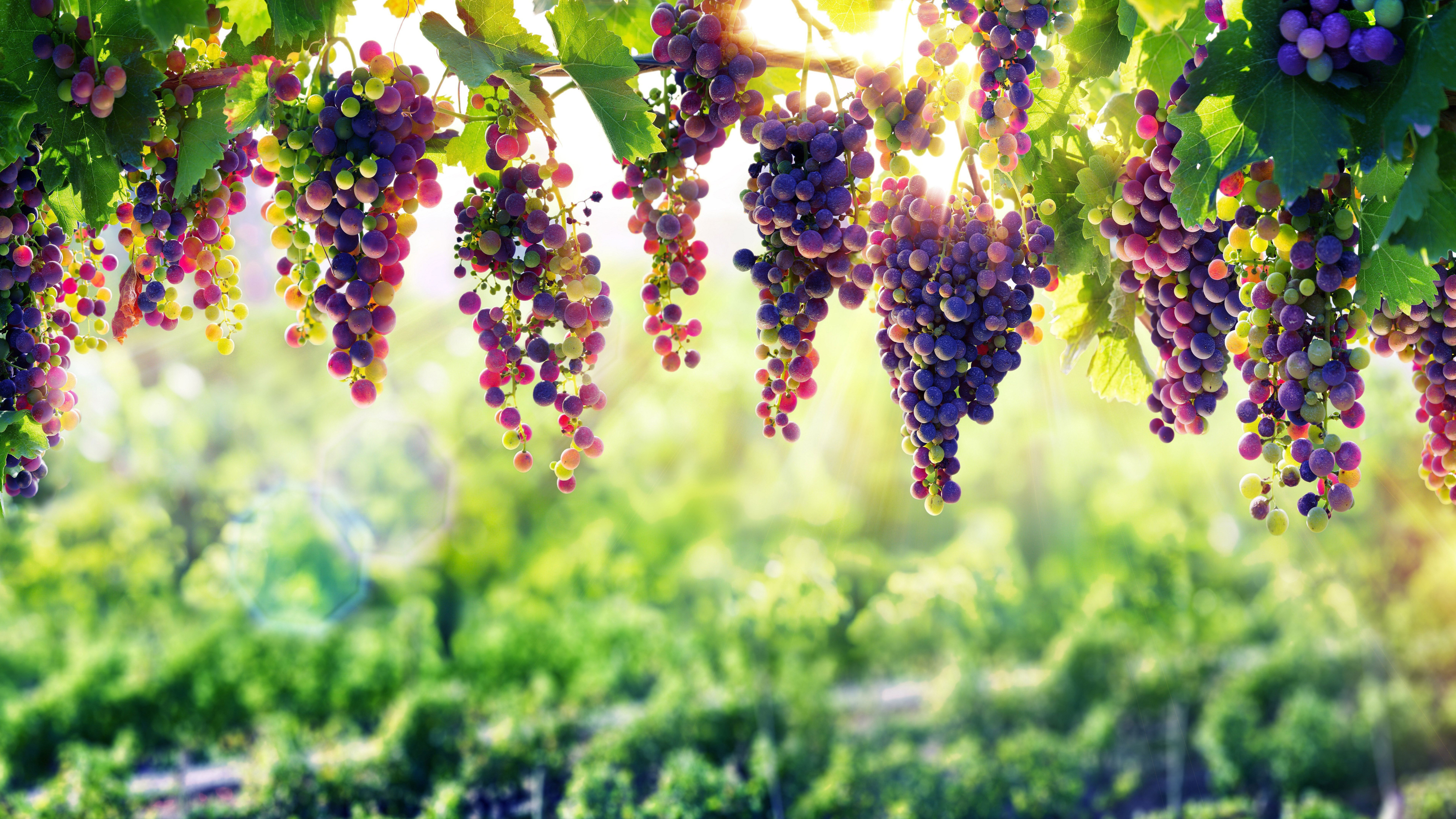 7680x4320 Grape 8k 8k Hd 4k Wallpapers Images Backgrounds