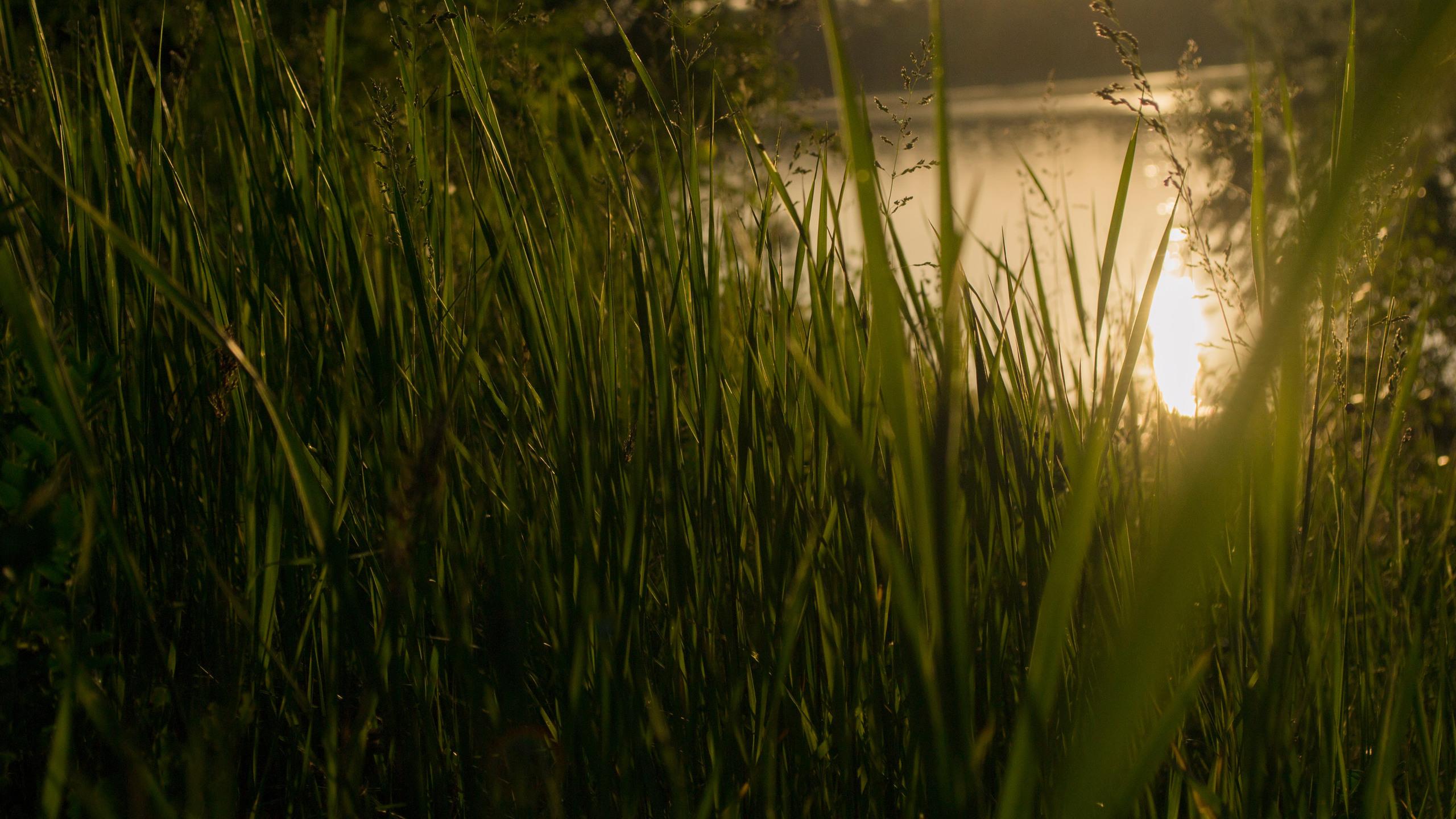 grass-4k-sunset-sw.jpg