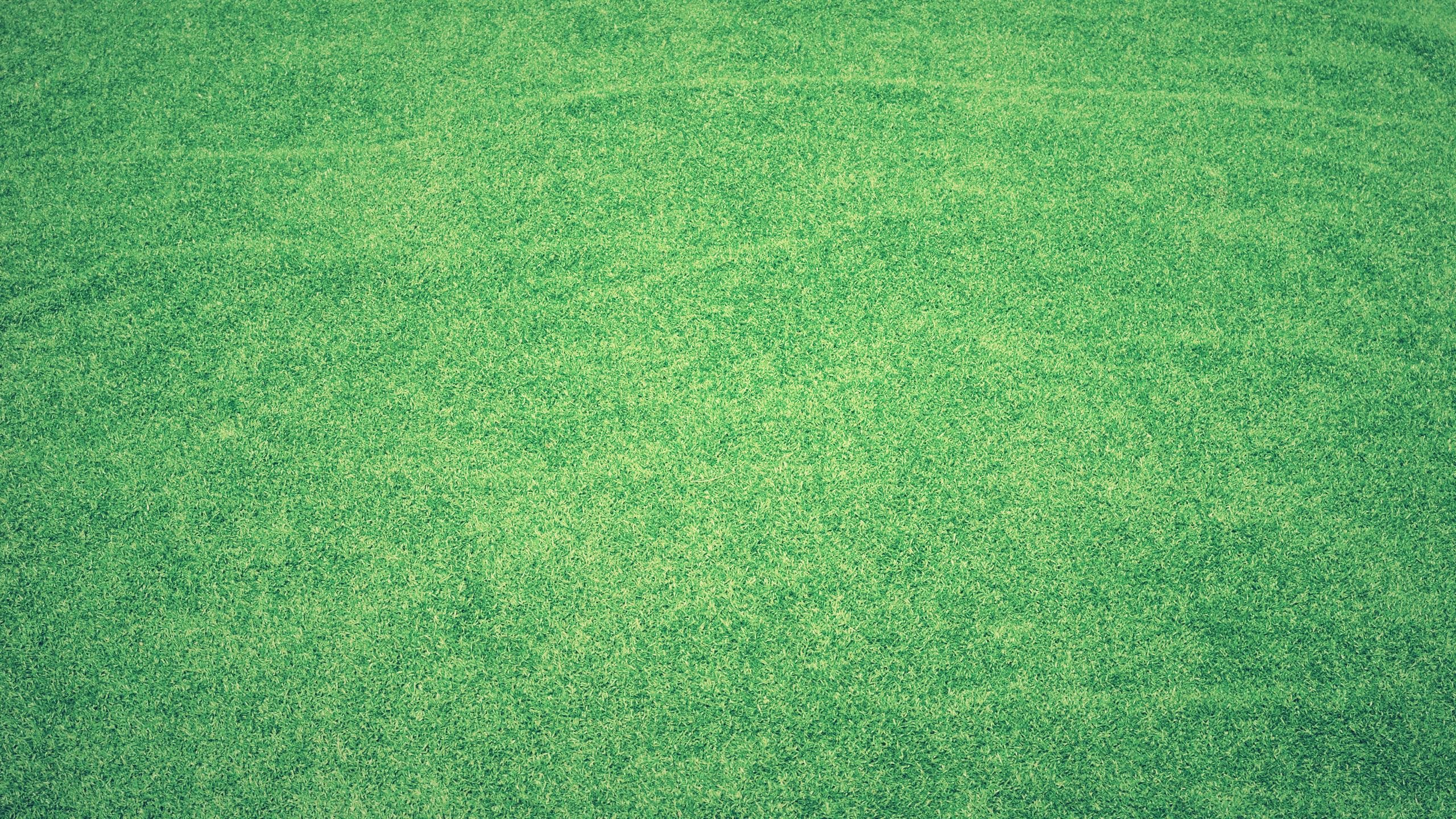 grass-abstract-background-4k-ok.jpg