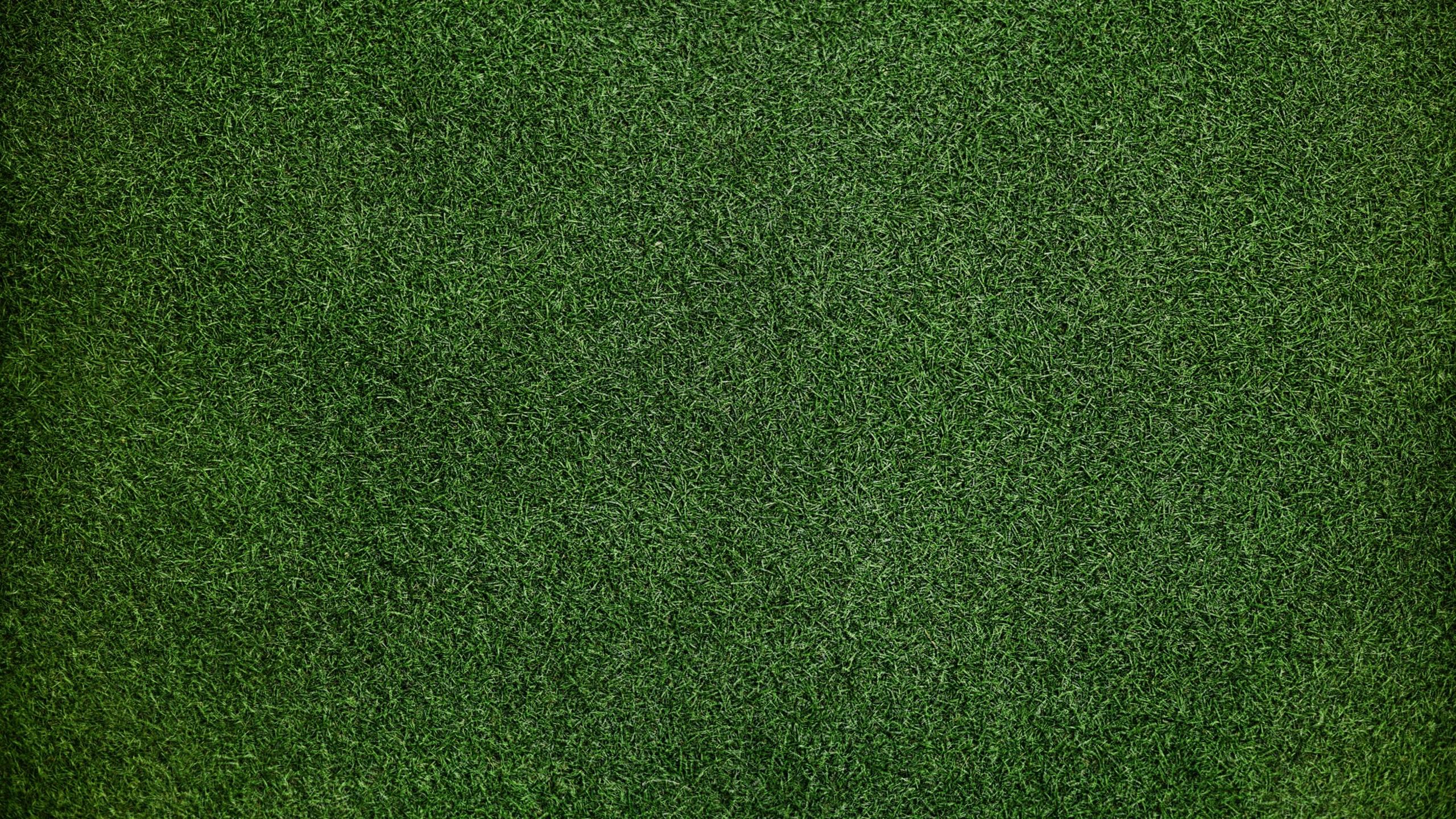2560x1440 Grass Background 1440P Resolution HD 4k ...