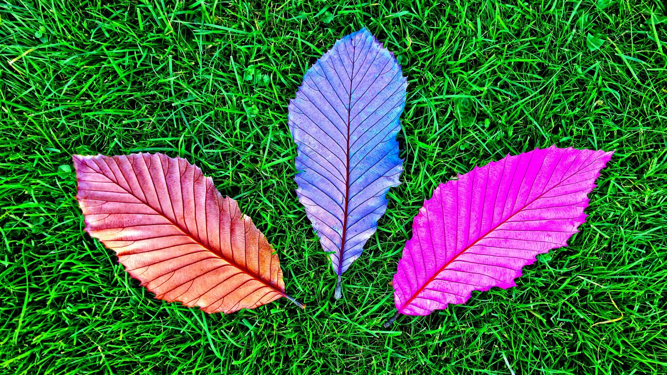 Grass Fallen Colorful Leaves 5k Pz