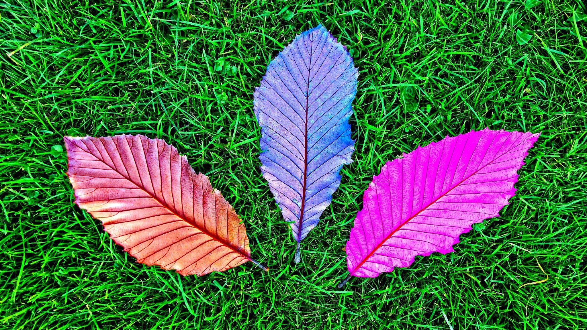 Grass Fallen Colorful Leaves 5k Pz