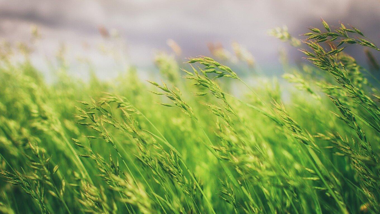 grass-field.jpg