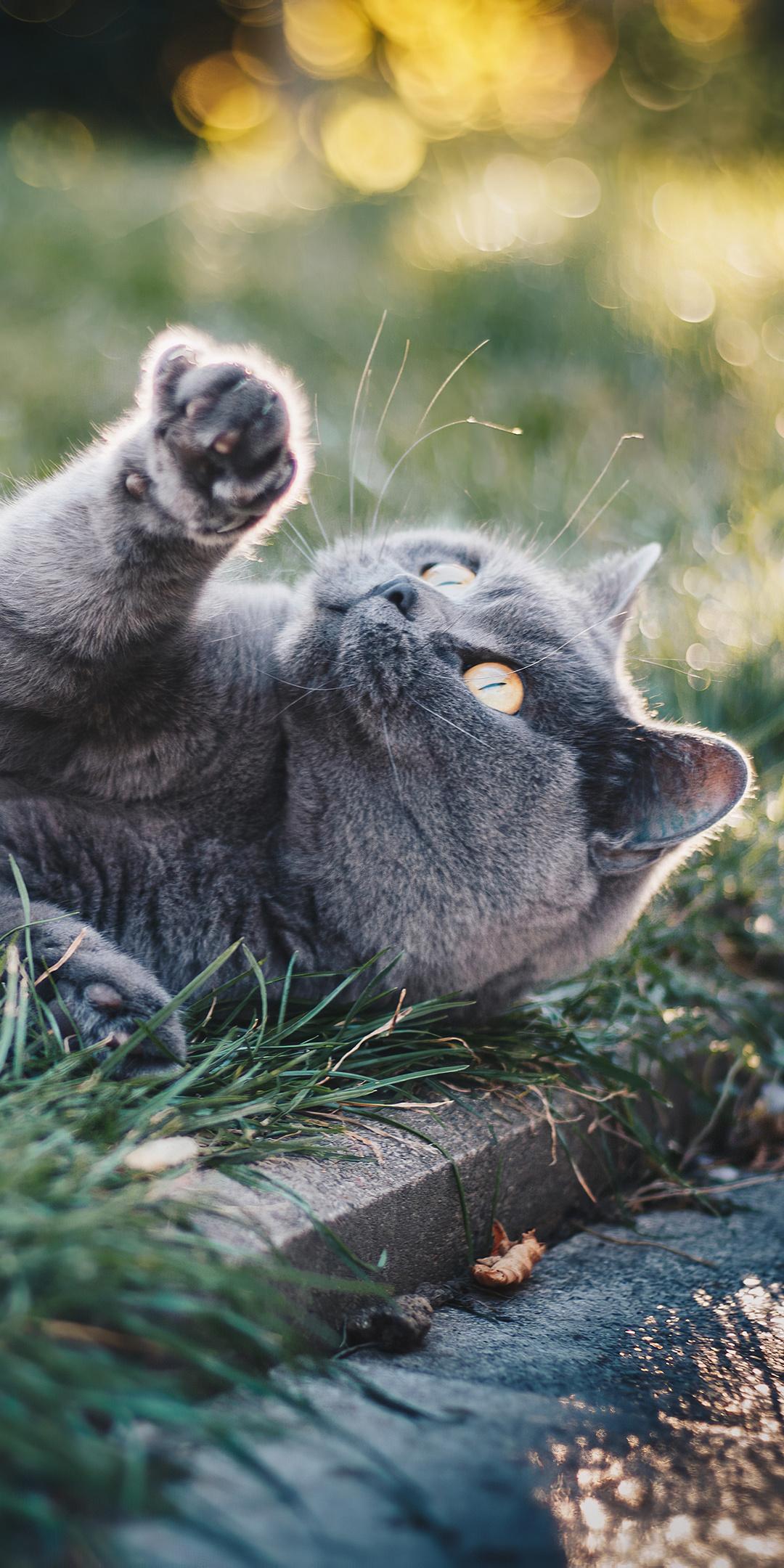 gray-cat-in-grass-4k-mc.jpg