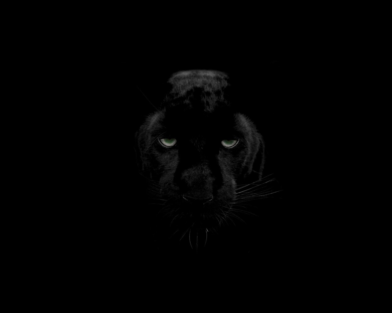 1280x1024 Green Eyes Black Panther 1280x1024 Resolution Hd 4k Wallpapers Images Backgrounds Photos And Pictures