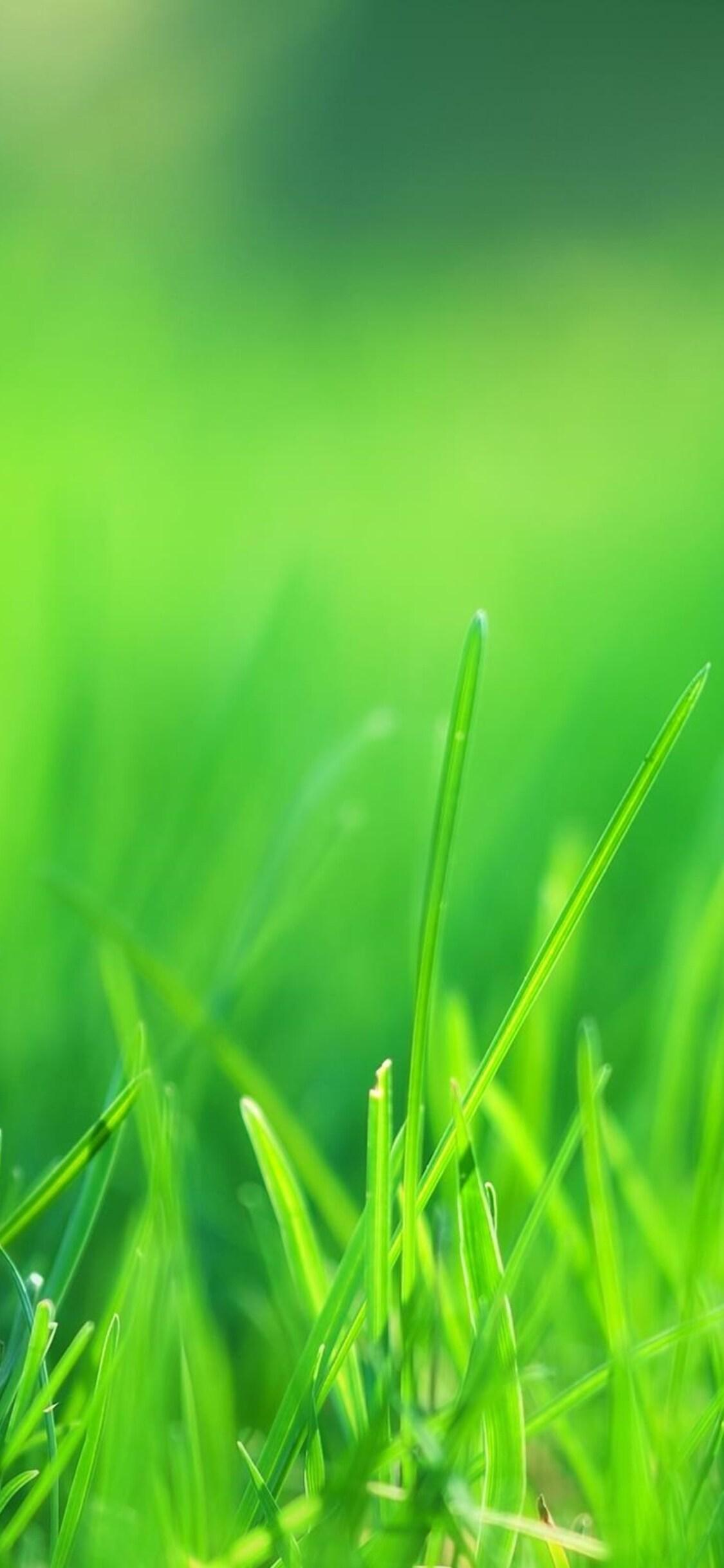 1125x2436 Green Grass Field Iphone Xs Iphone 10 Iphone X Hd 4k