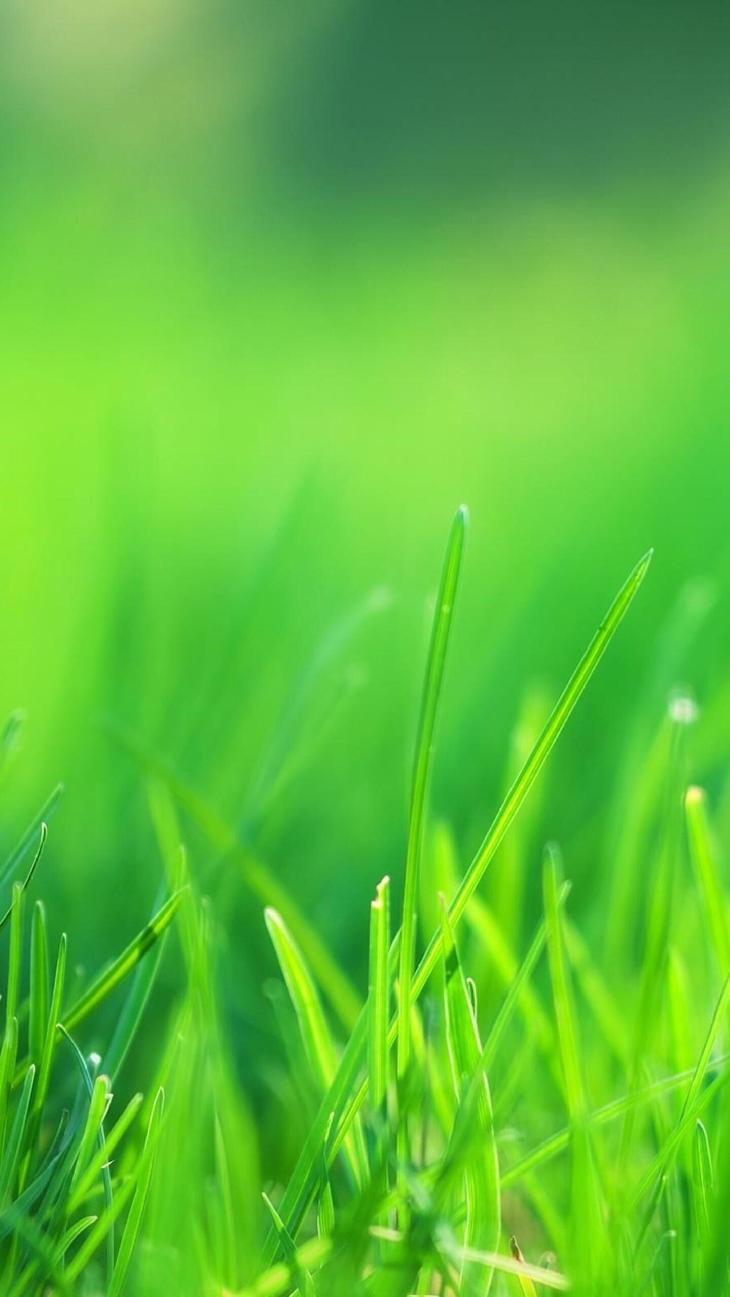 green-grass-field.jpg