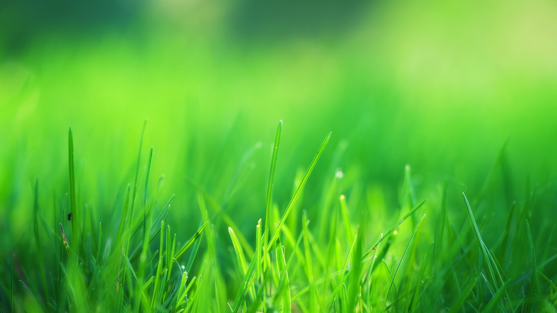 1920x1080 Green Grass Field Laptop Full Hd 1080p Hd 4k
