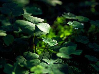 green-leaf-macro-nature-grass-water-drop-7a.jpg