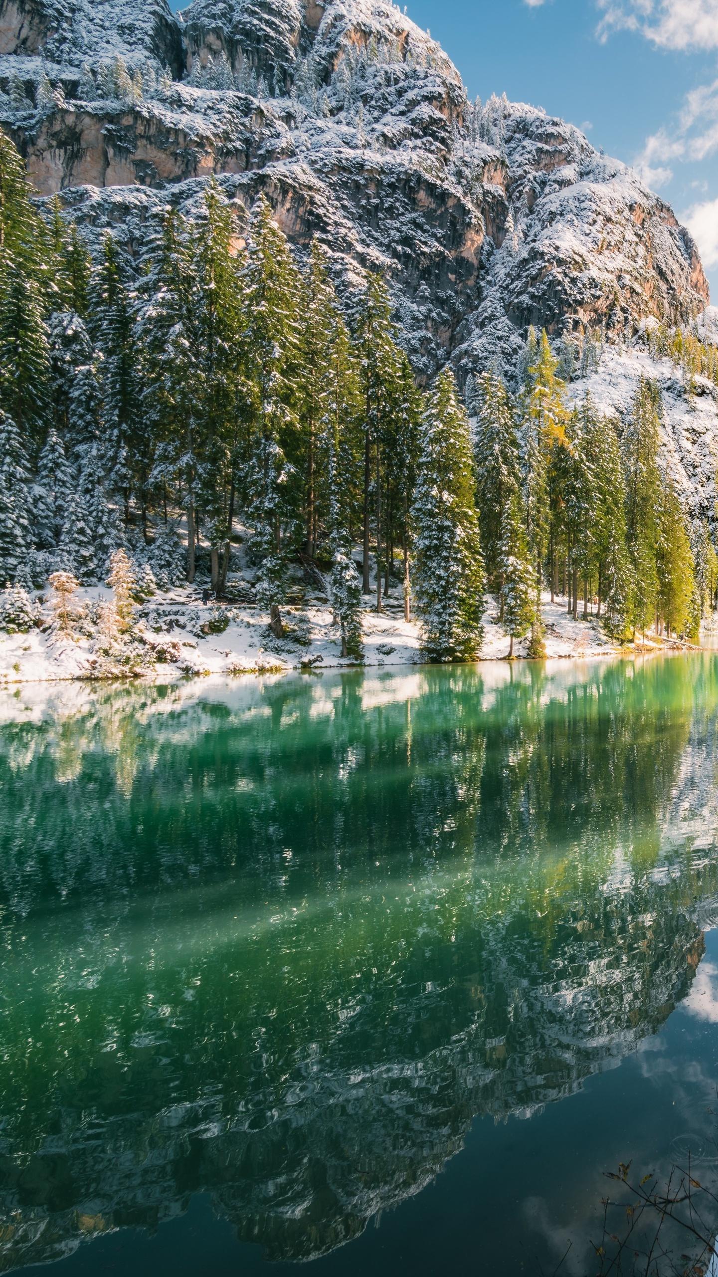 green-trees-near-body-of-water-reflection-8k-iv.jpg