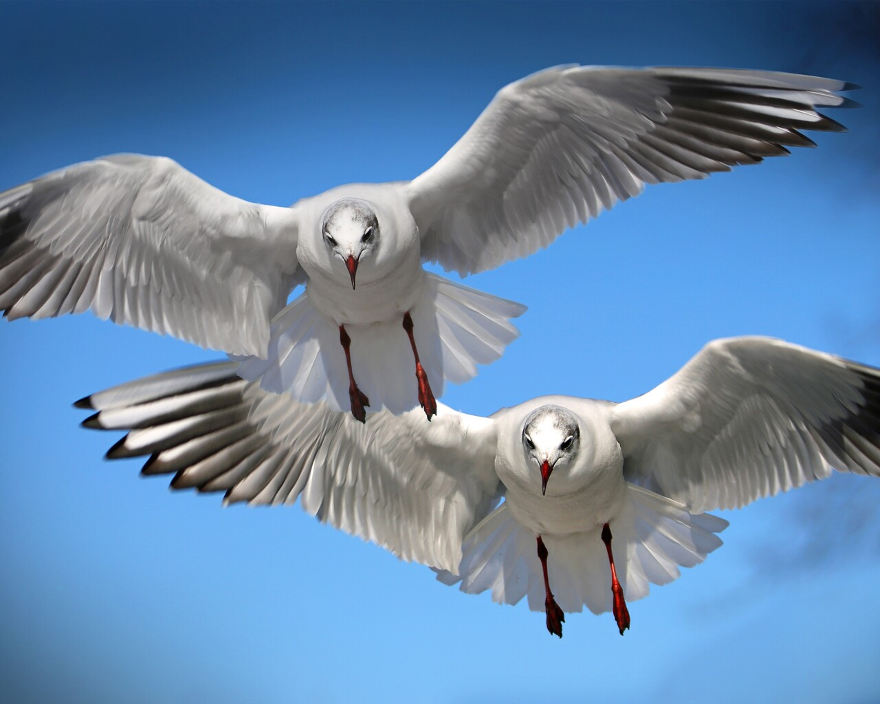 gulls-seabirds.jpg