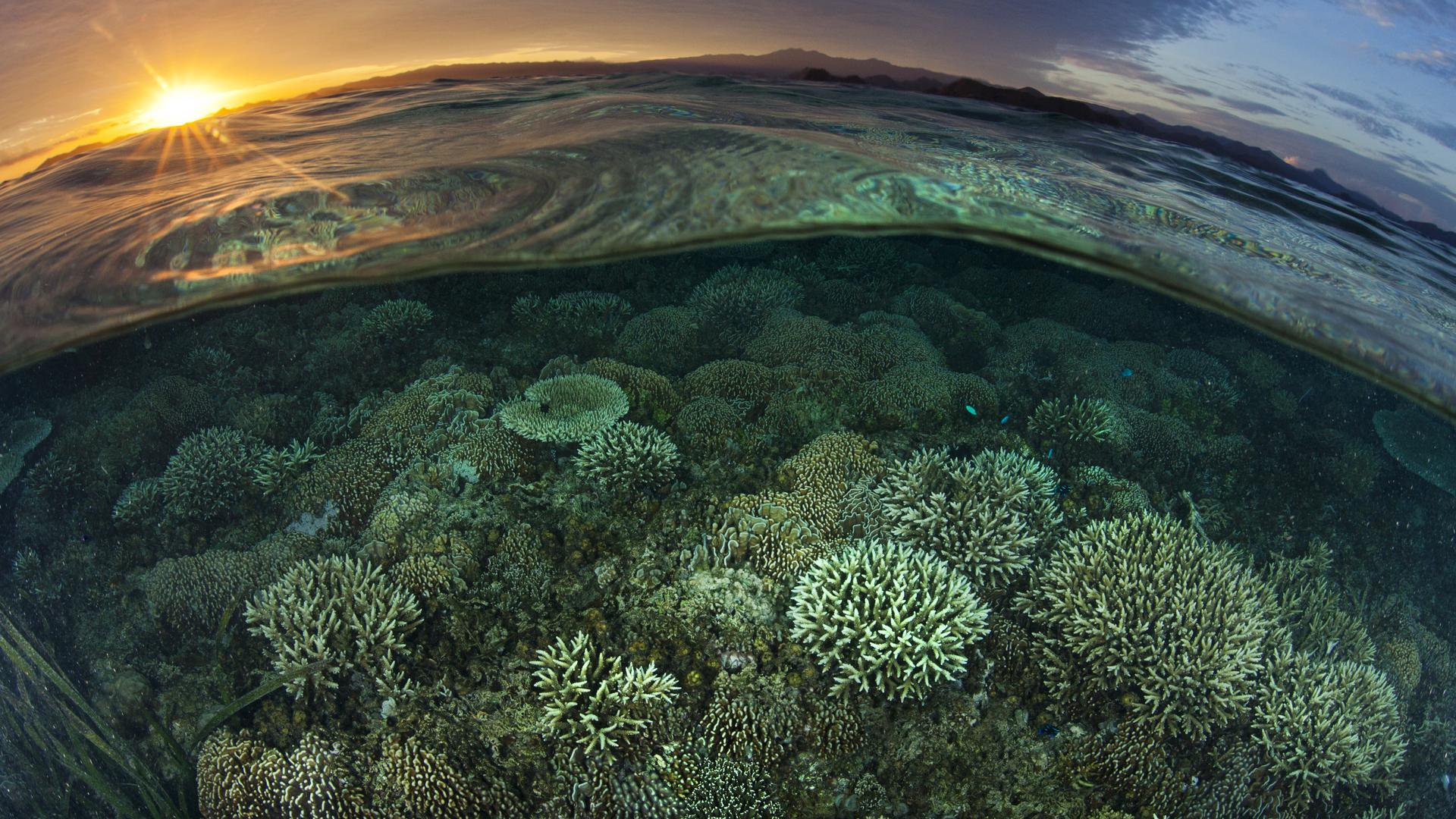 half-underwater-and-half-on-the-water-5k-z2.jpg