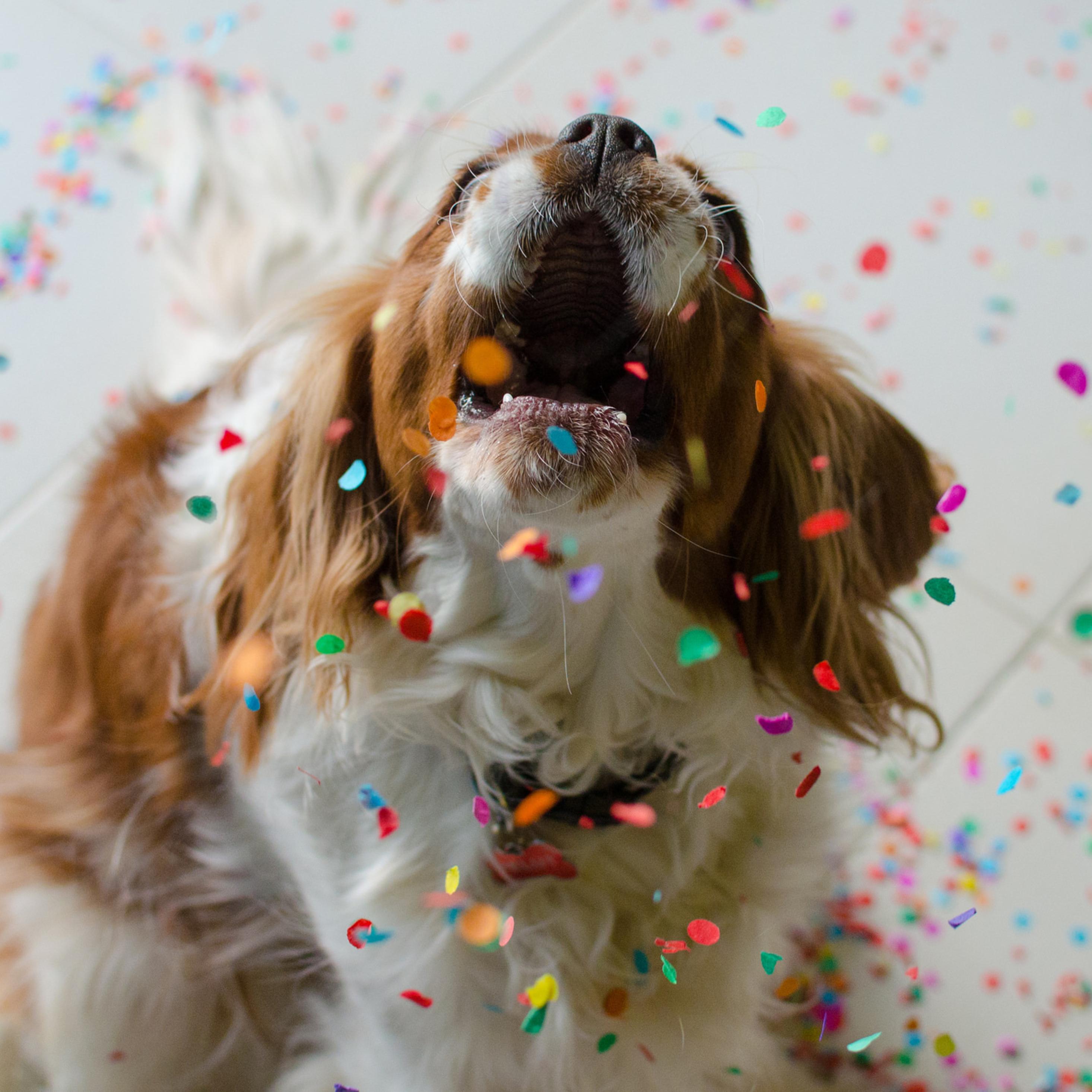 2932x2932 Happy Cute Dog Ipad Pro Retina Display Hd 4k