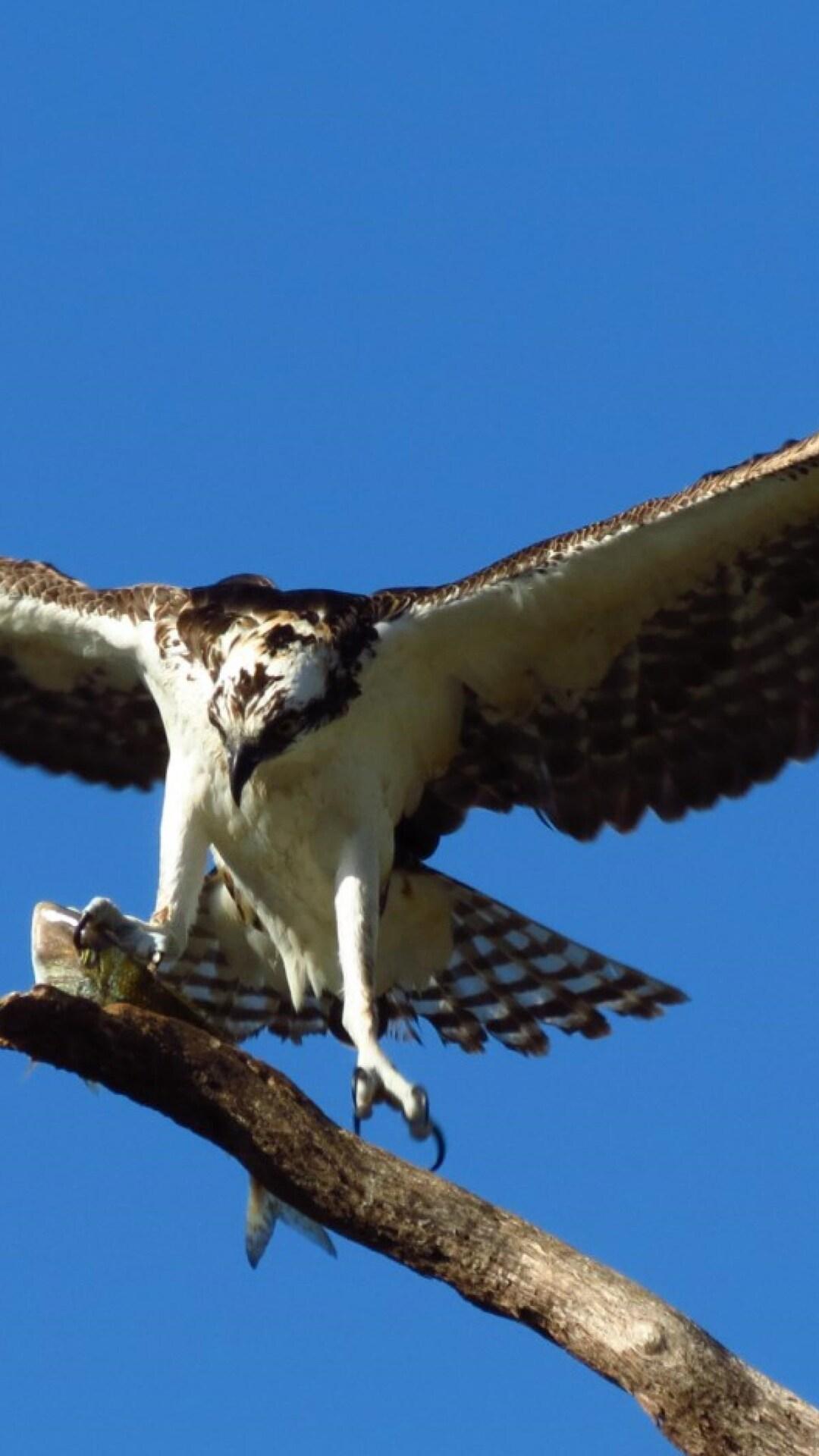 hawk-bird-predator.jpg