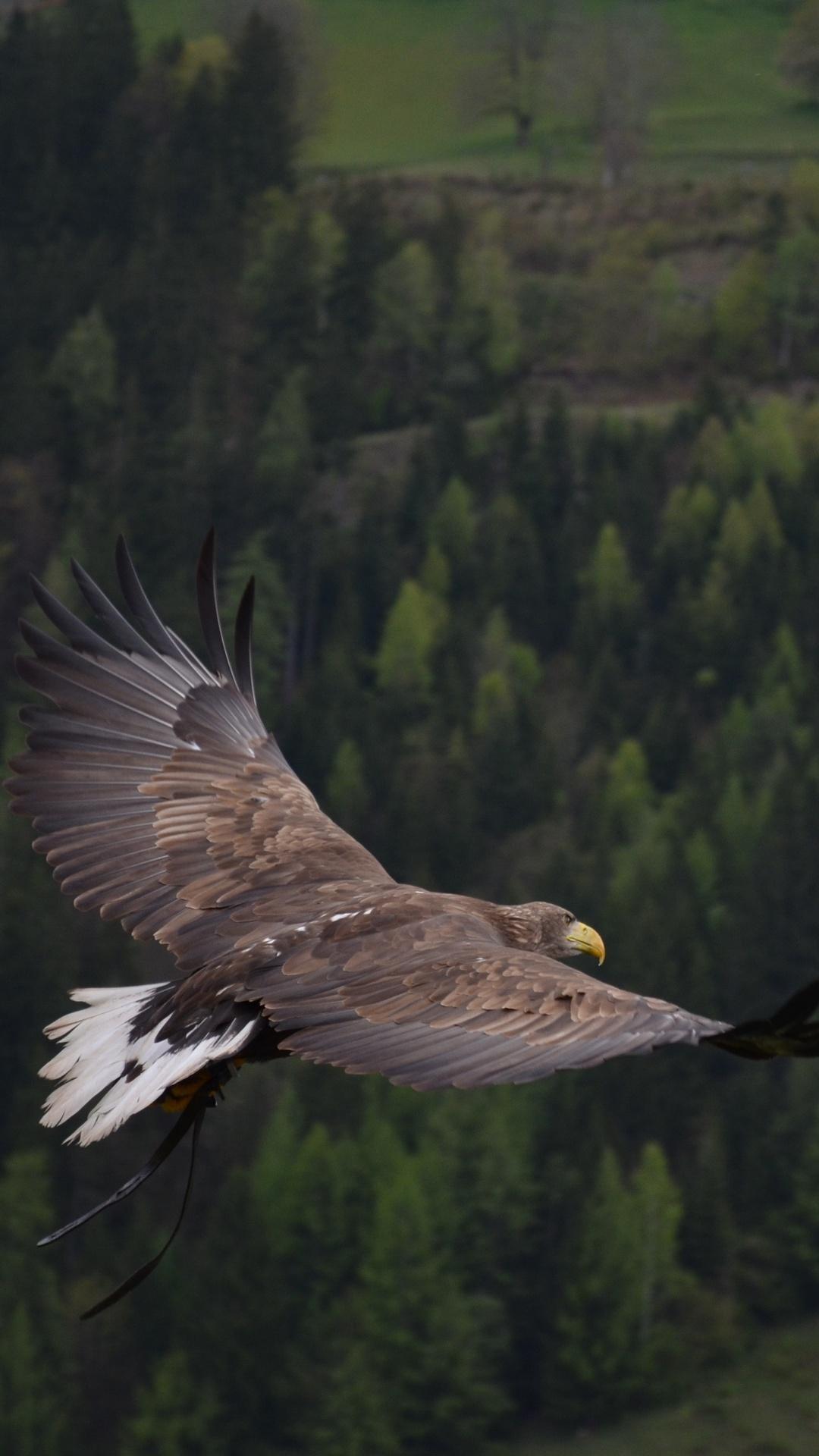hawk-flight-bd.jpg