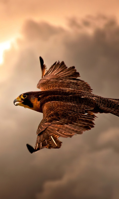 hawk-flying-in-sky-4k-az.jpg