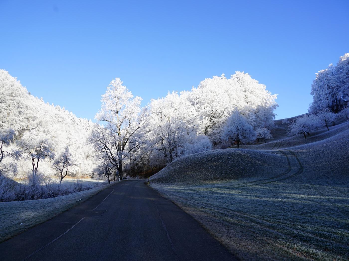 hill-frost-road-trees-8k-g1.jpg