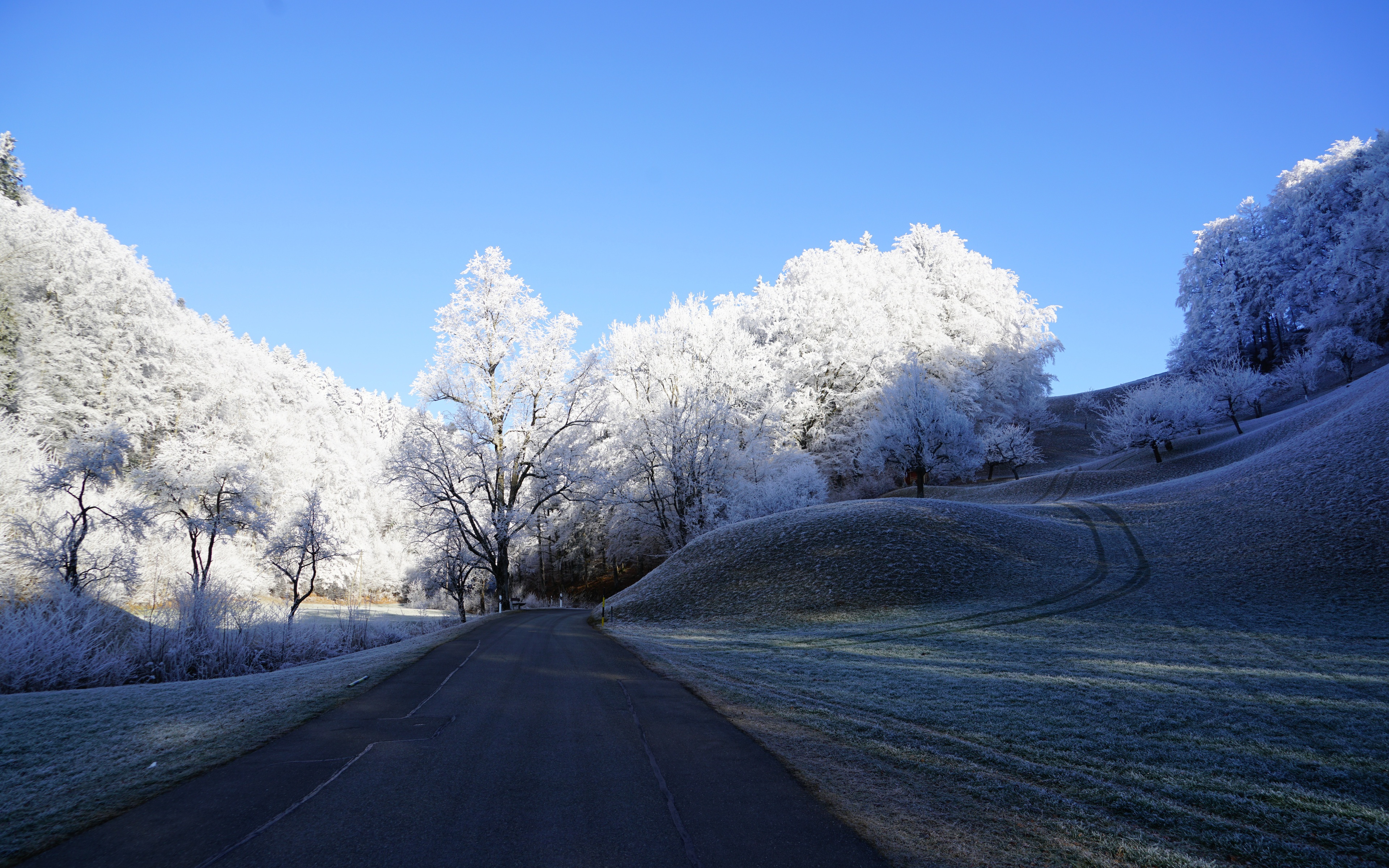 hill-frost-road-trees-8k-g1.jpg