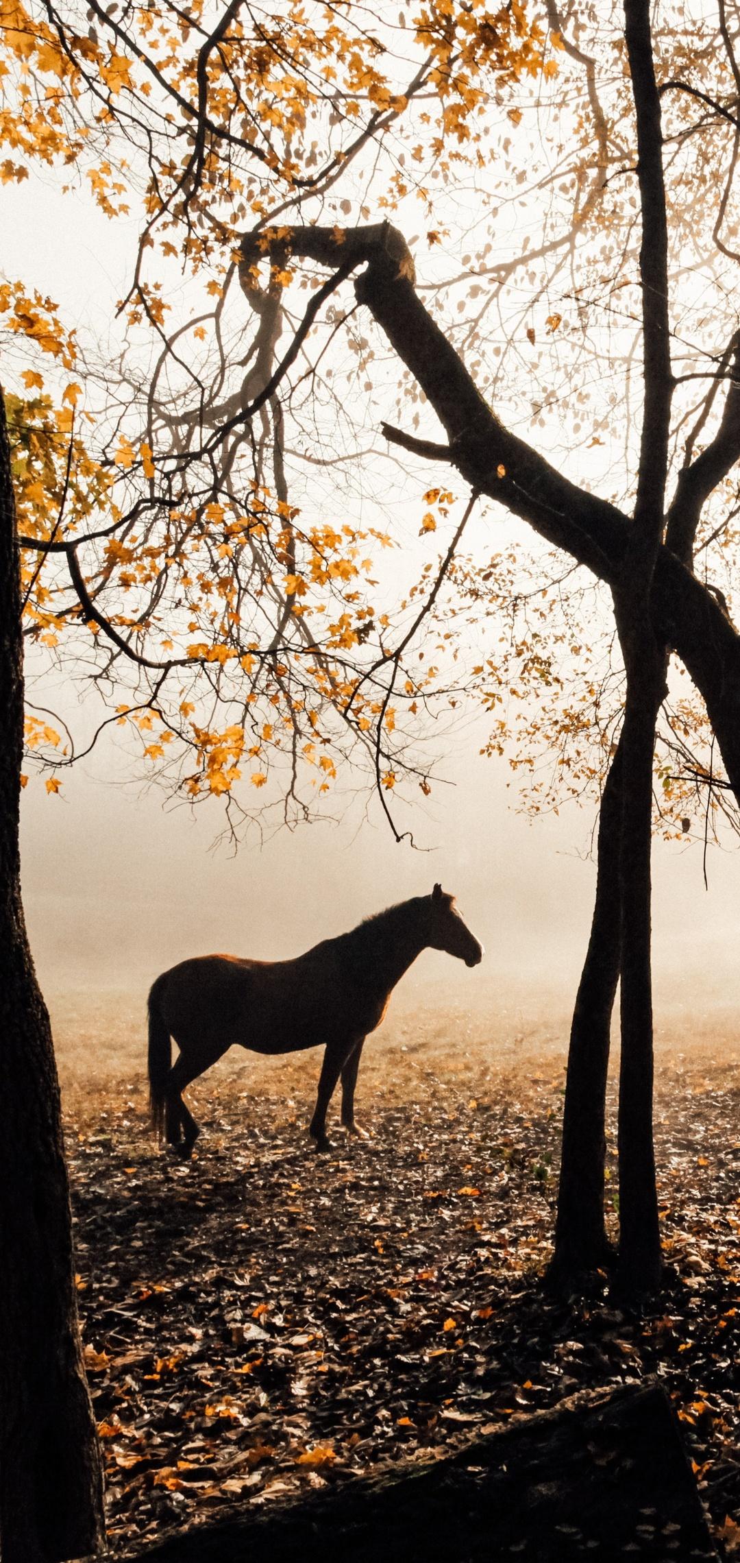 horse-sunlight-forest-photography-5k-xm.jpg