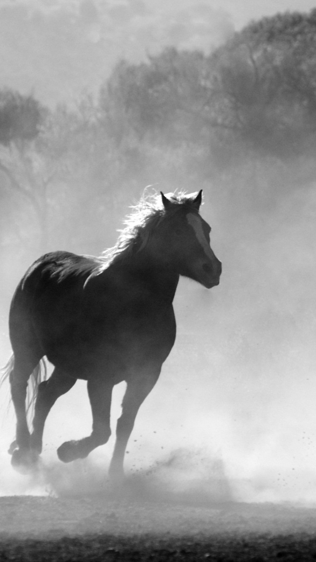 1080x1920 Horses Running Dust Monochrome 4k Iphone 7 6s 6 Plus