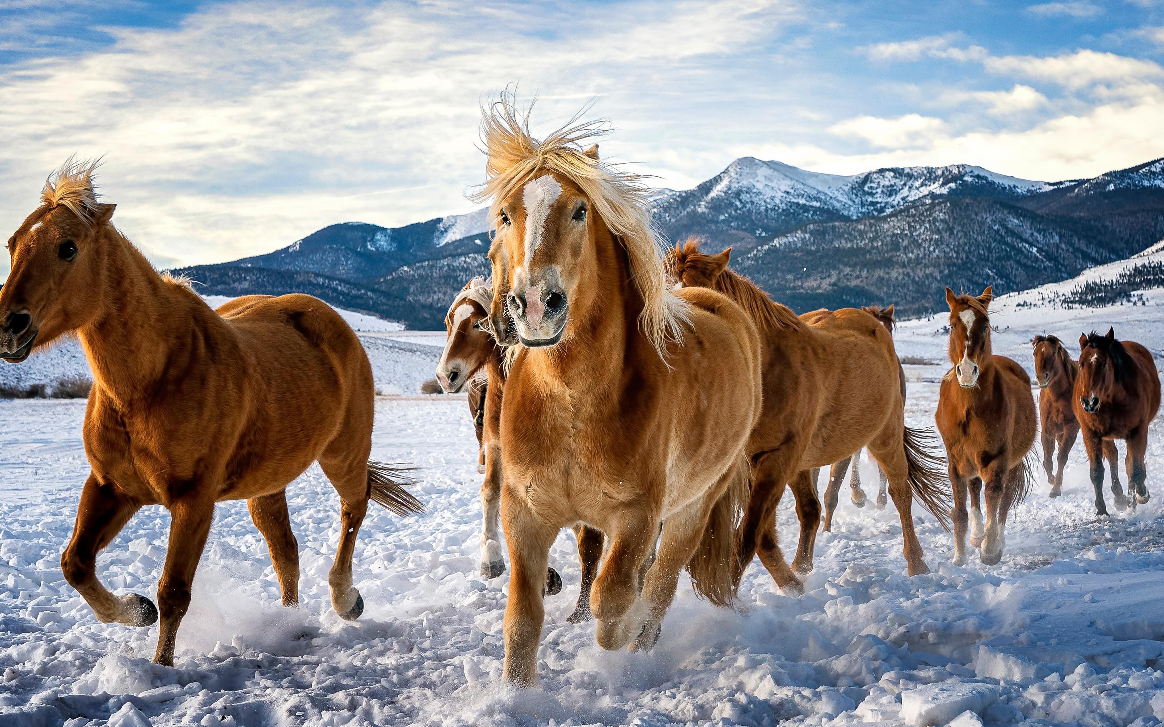 horses-snow-running-4k-z0.jpg