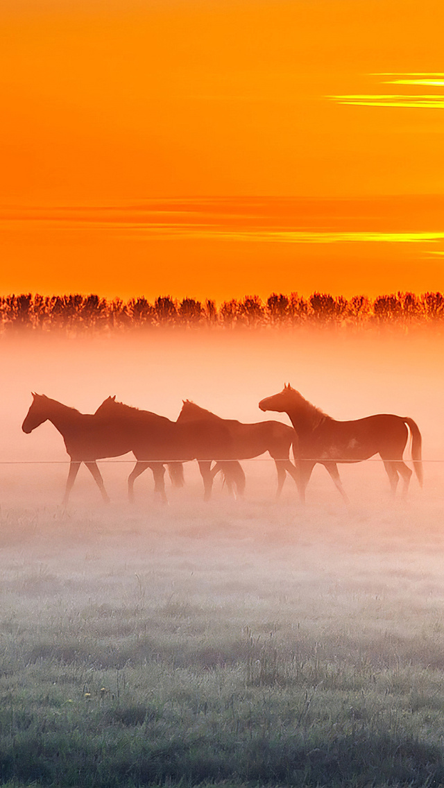 horses-sunset-4k-uk.jpg