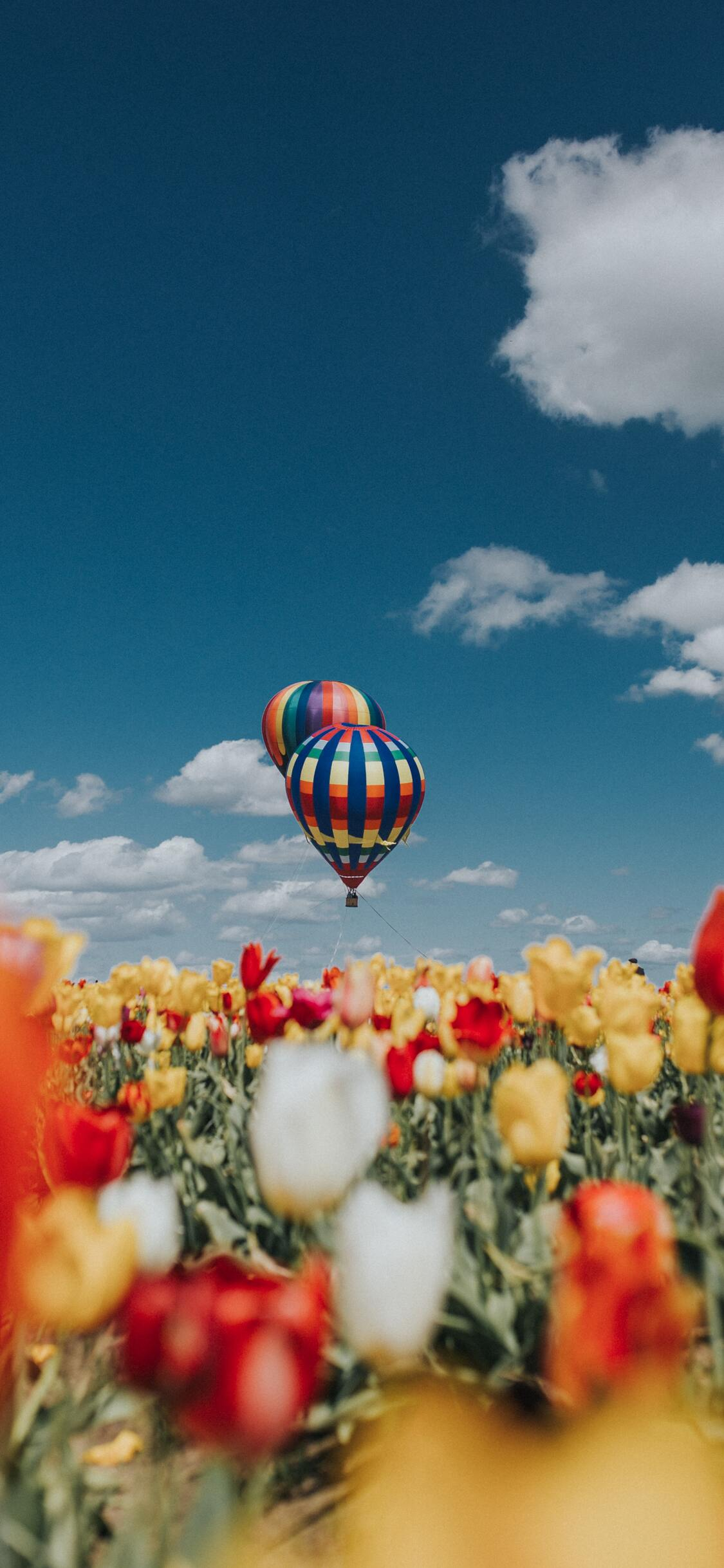 1125x2436 Hot Air Balloons White Red Yellow Tulip Flowers