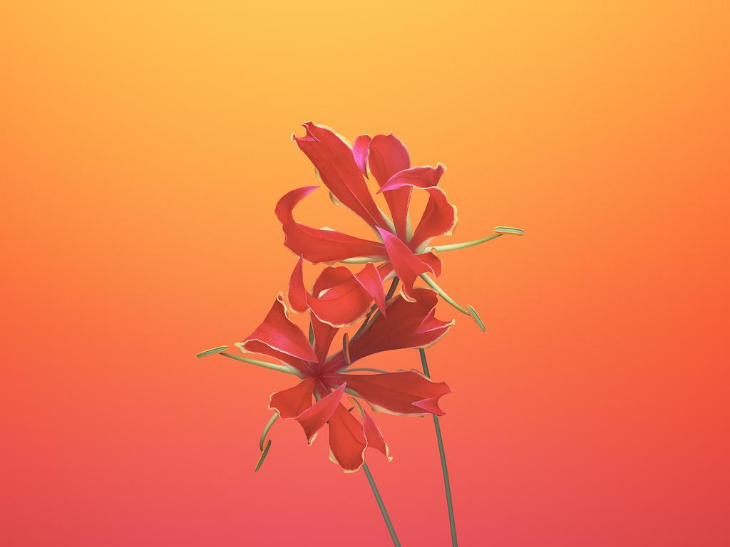 ios-11-flower-gloriosa-98.jpg