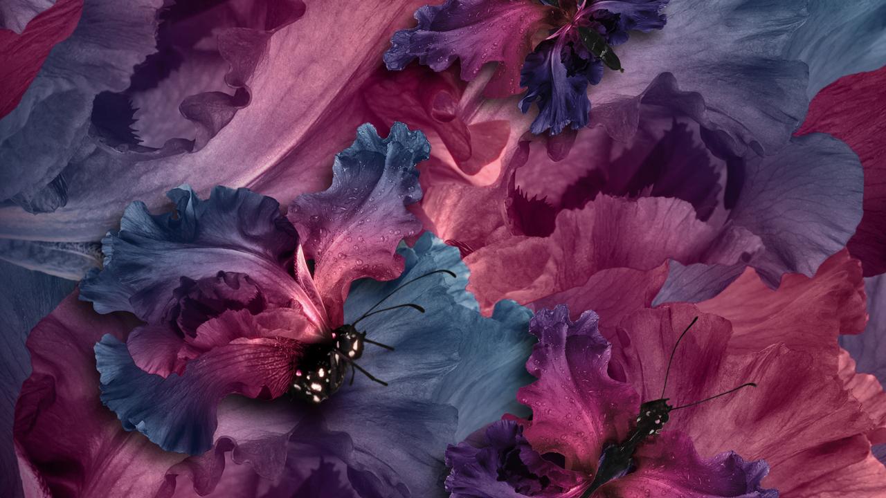 irises-butterflies-t7.jpg