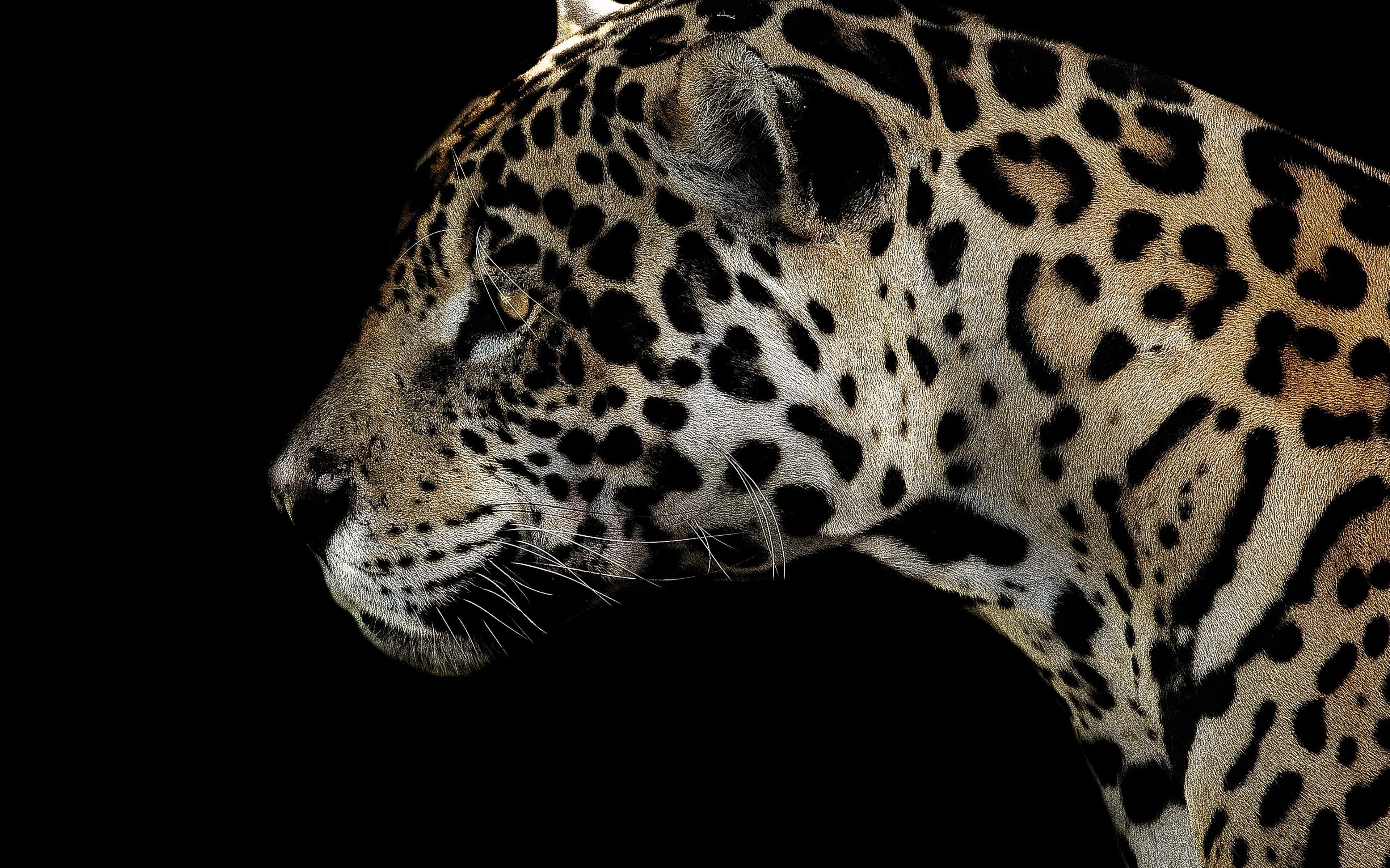 3840x2400 Jaguar Spotted Close 4k 4k HD 4k Wallpapers ...