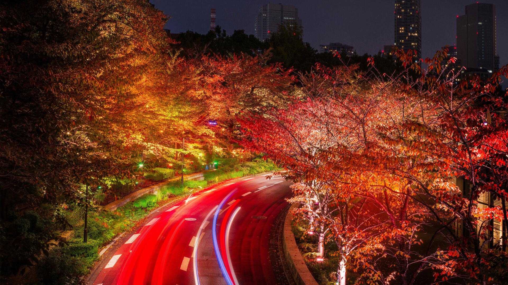 1920x1080 Japan Tokyo Roads Autumn Trees Night Laptop Full ...