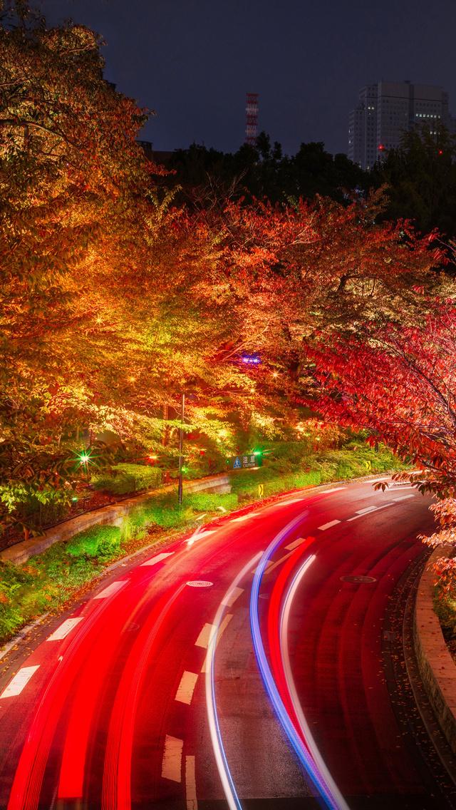 japan-tokyo-roads-autumn-trees-night-q7.jpg