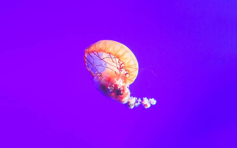 jellyfish-12k-jn.jpg