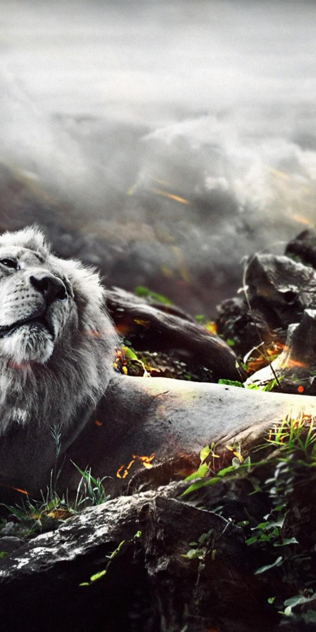 jungle-lion-creative.jpg