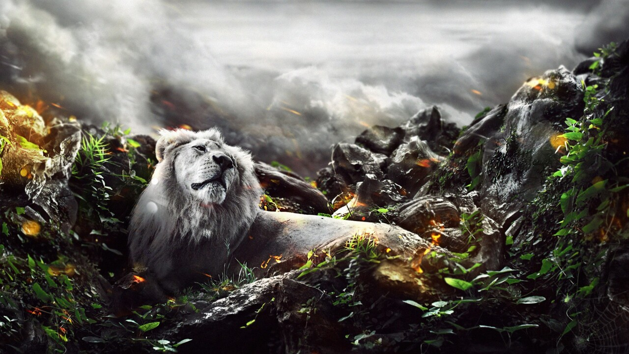 jungle-lion-creative.jpg