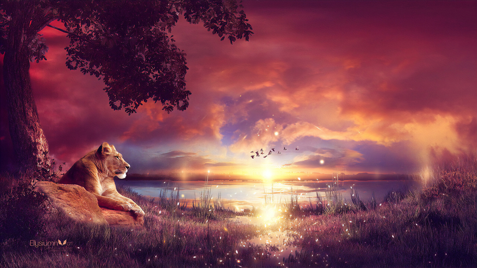 king-enjoying-the-sunset-q6.jpg