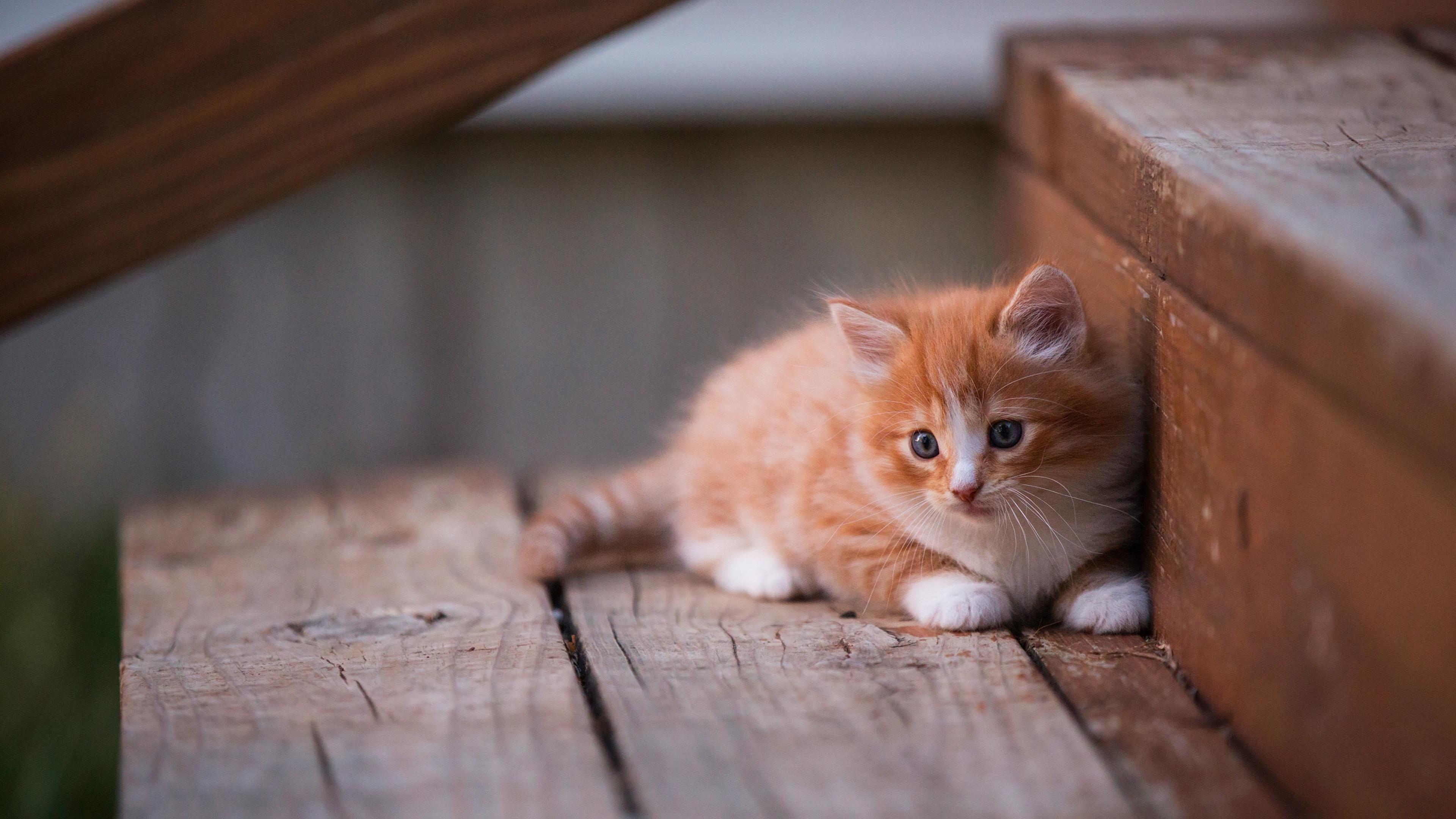 3840x2160 Kitten Cute 4k HD 4k Wallpapers, Images ...