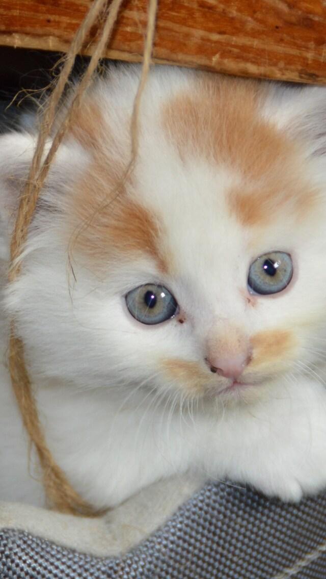 kittens-cats-copuple.jpg