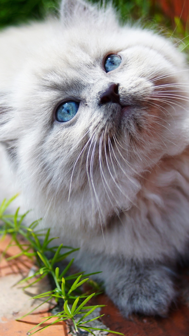 kitty-blue-eyes-5k-ly.jpg